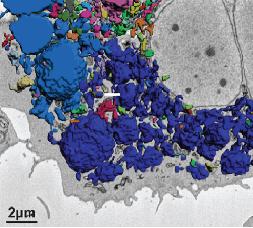 CIMR rarefest graphic - magnified cell image